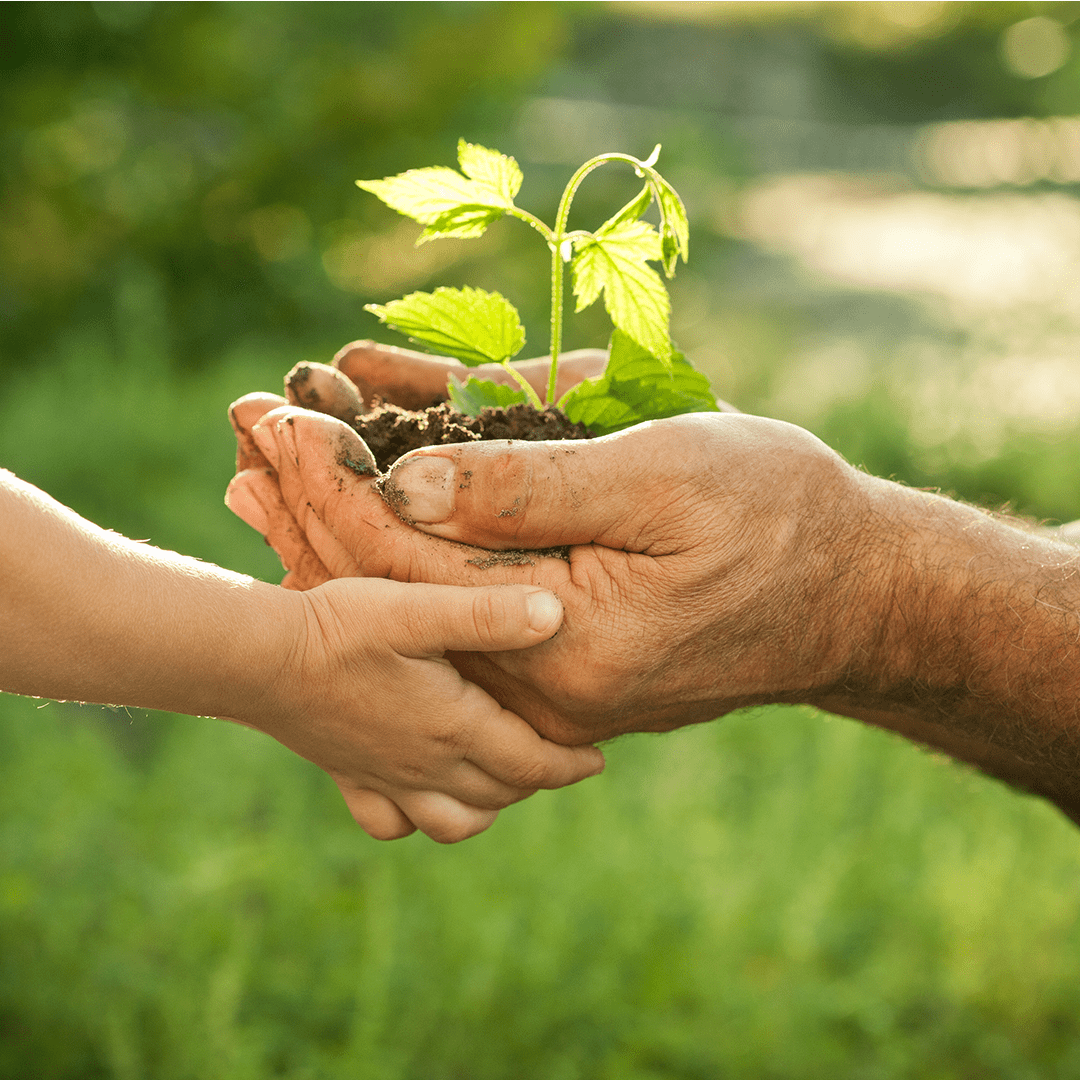 Découvrez notre engagement en matière d'environnement